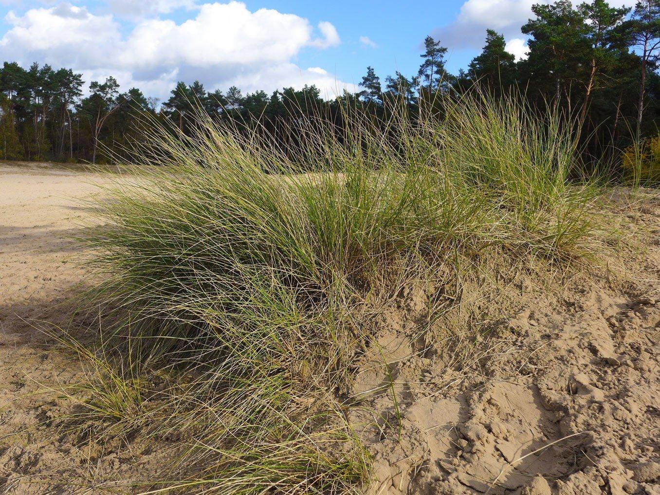 Sand und mehr